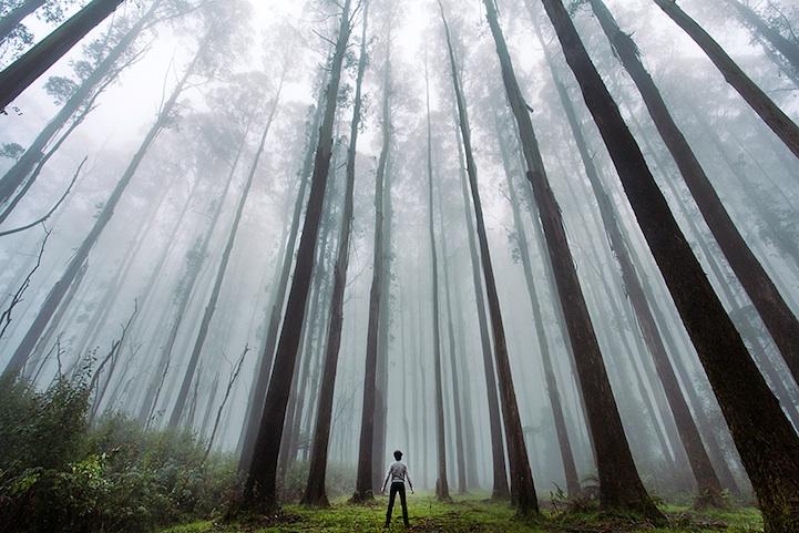 Larger Than Life Nature