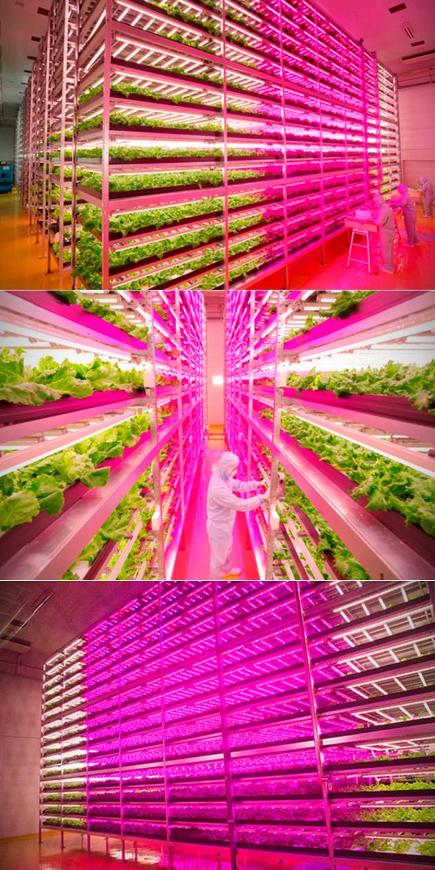 LED Indoor Farm
