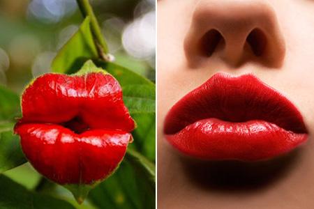 Lips Plant