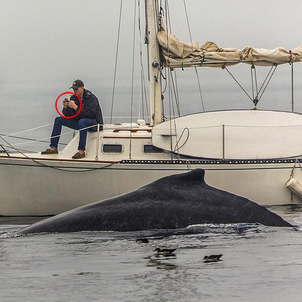 Man Texting Whale