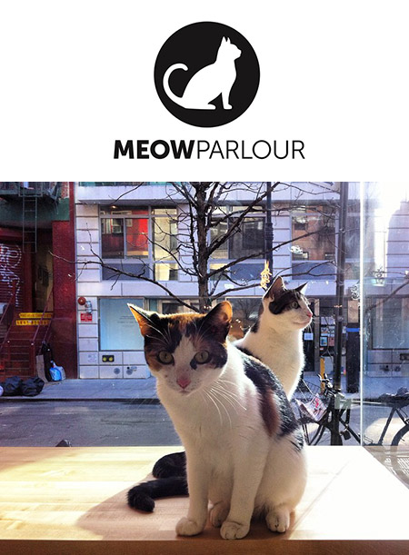 Meow Parlour New York Cat Cafe