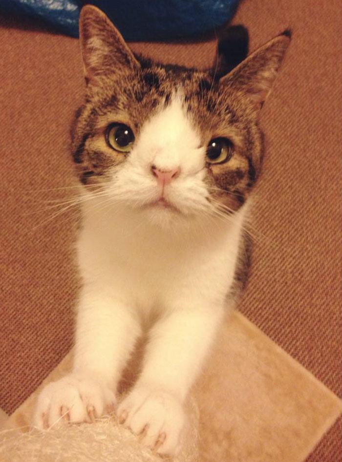 Monty the Cat