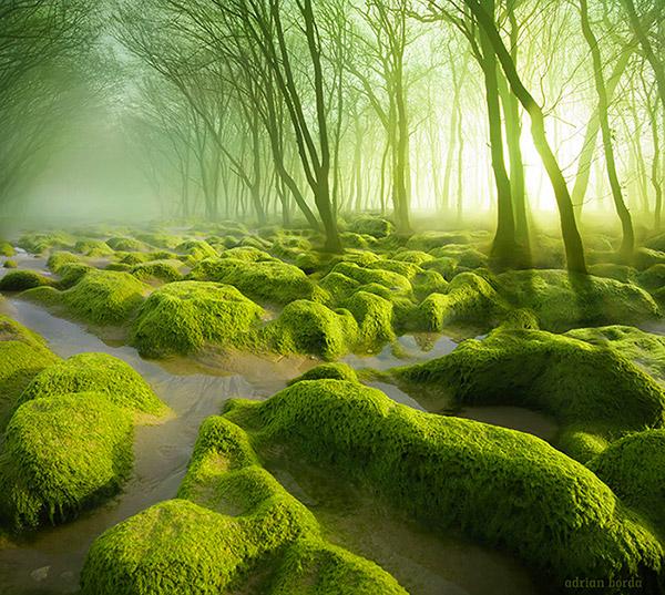 Moss Swamp Romania