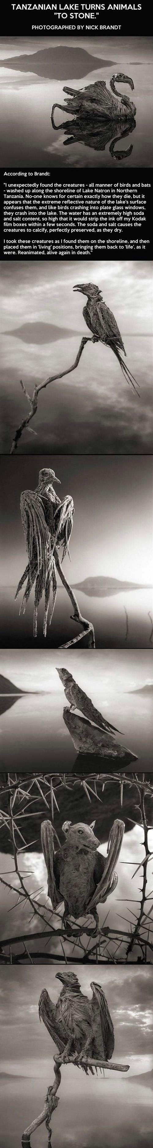 Mummified Lake