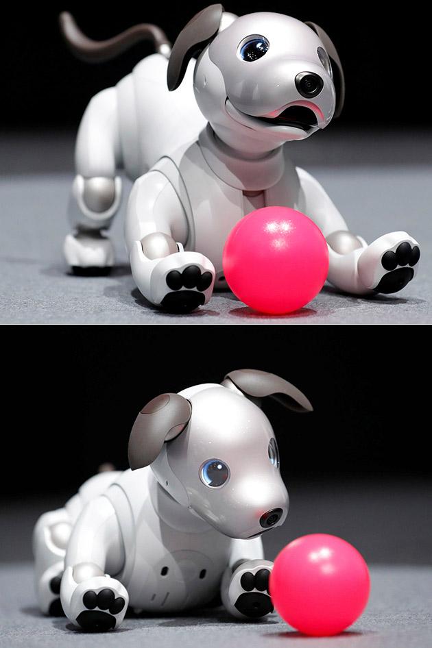 New Sony Aibo Dog