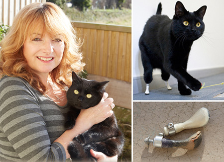 Noel Fitzpatrick Cost >> Meet Oscar, the Bionic Cat Who Was Fitted with Prosthetic Feet - TechEBlog