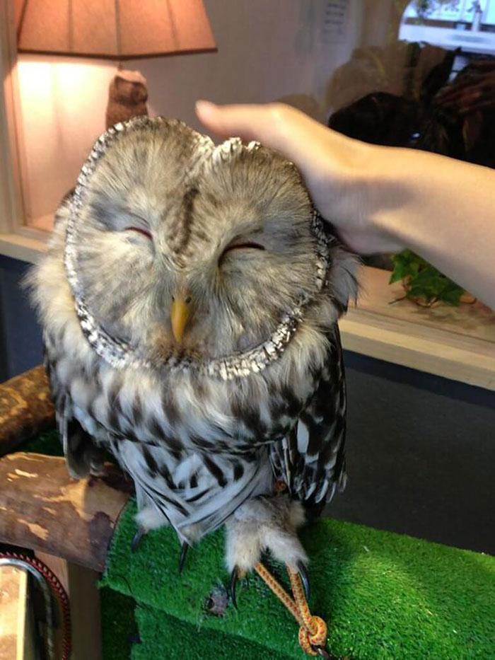 Owl Bar London