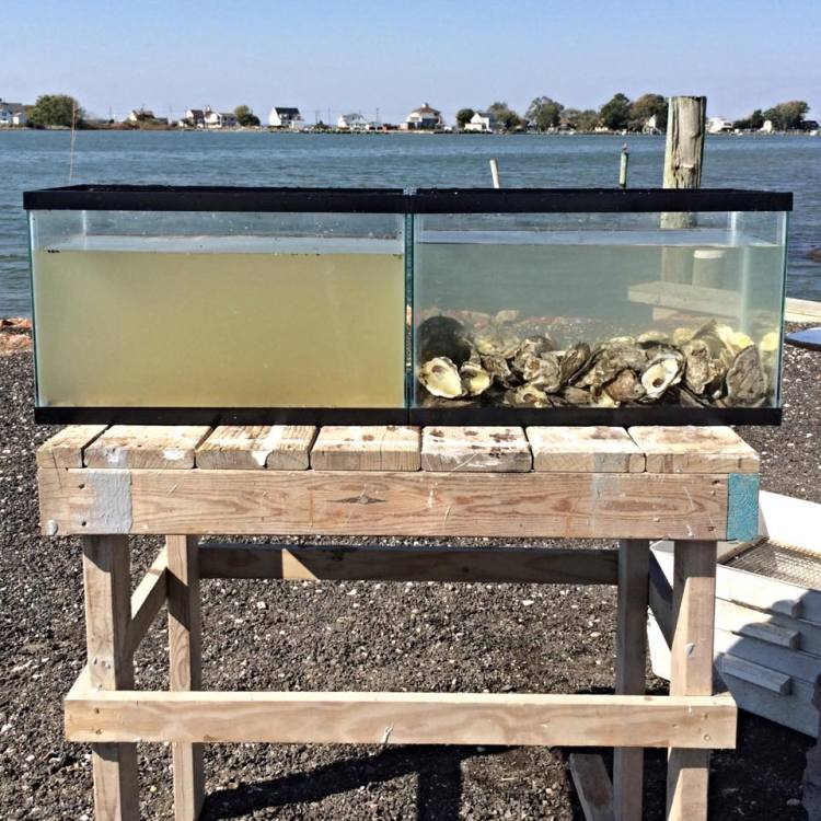 Oyster Water Filter