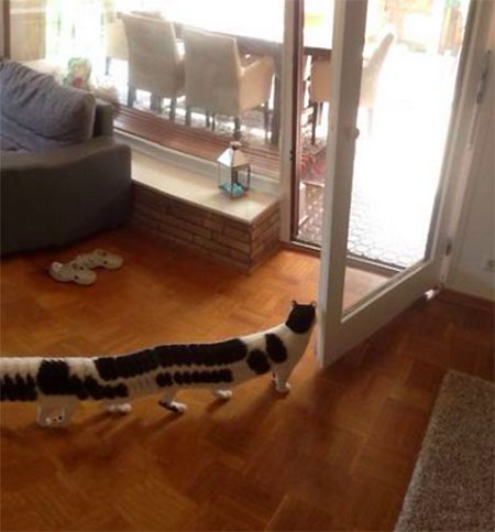 Panoramic Cat Fail