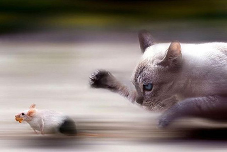24 Incredible Animal Photos That Were Perfectly Timed