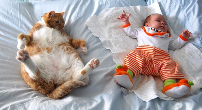Photographer Child Cat