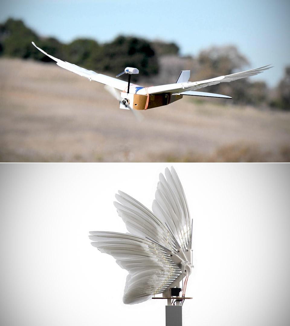 PigeonBot Bird Robot Feathers