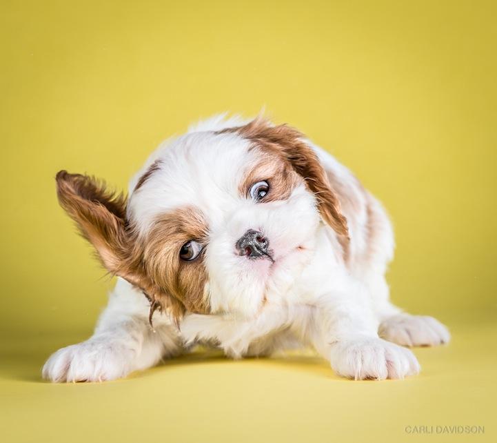 Puppies Shaking