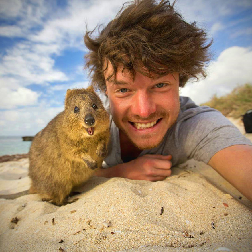 Hanging with a Quokka and 12 More Funny Animal Selfies Shot By Allan Dixon – TechEBlog