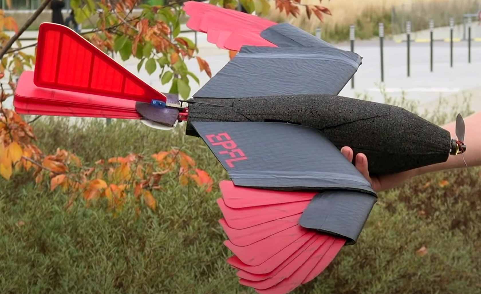 Raptor-Inspired Drone Morphing Wings Tail
