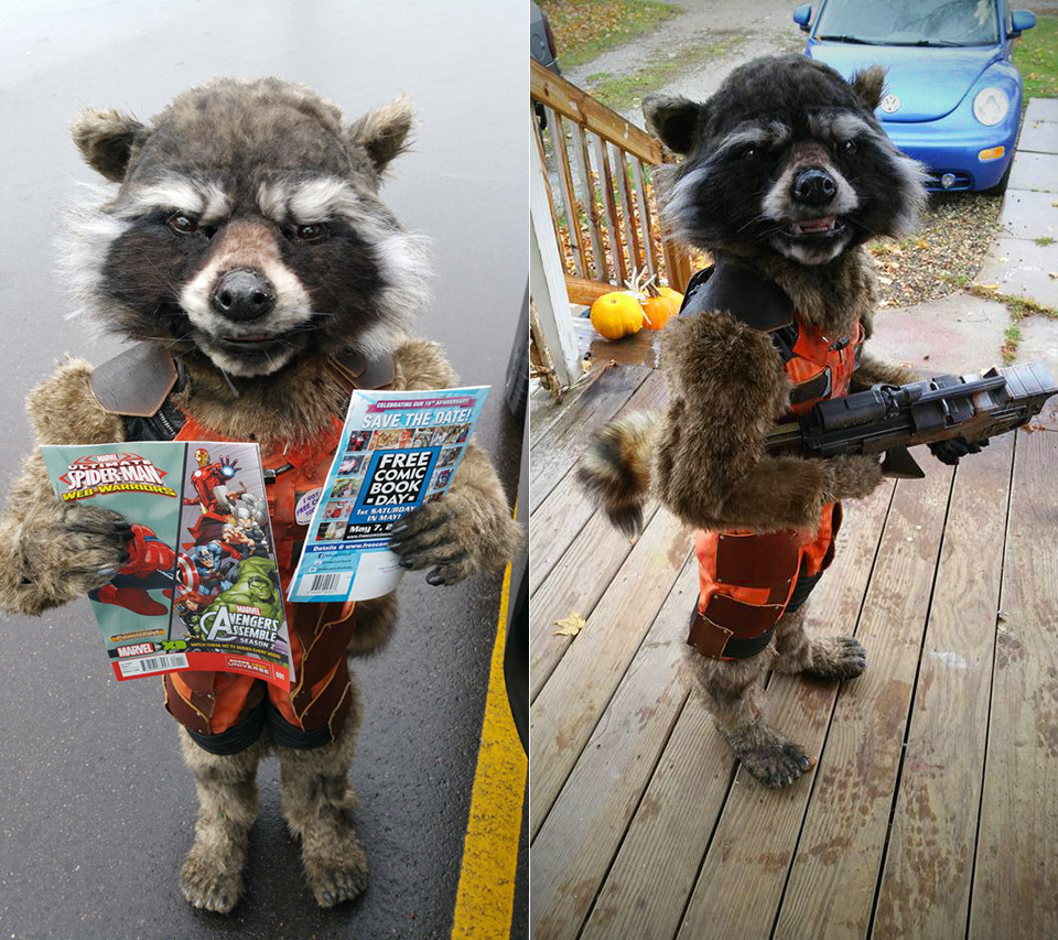Real Rocket Raccoon