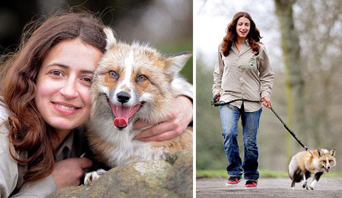 Rescued Fox Dog