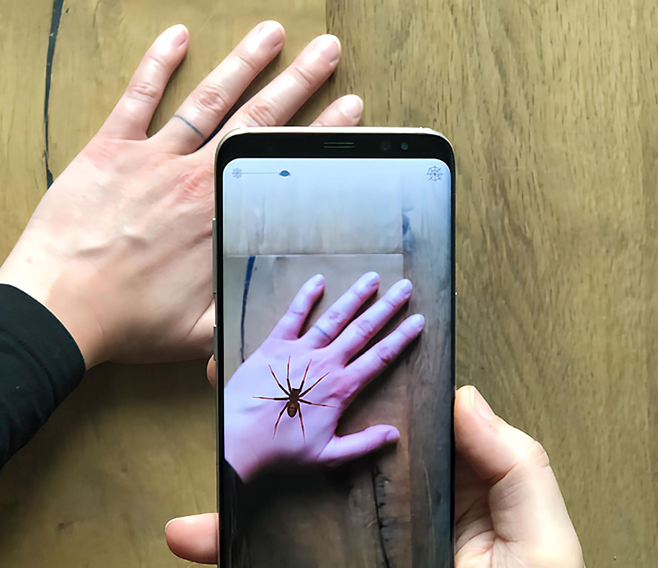 Research Phobys App Spider Augmented Reality Fear Arachnophobia