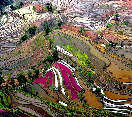 Rice Field Photography