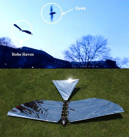 College Researchers Unveil Robo Raven, a Robot That Flies