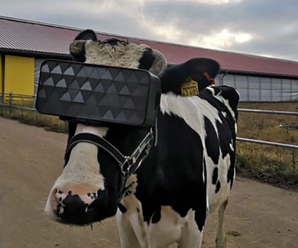 Russia Cow VR Headset