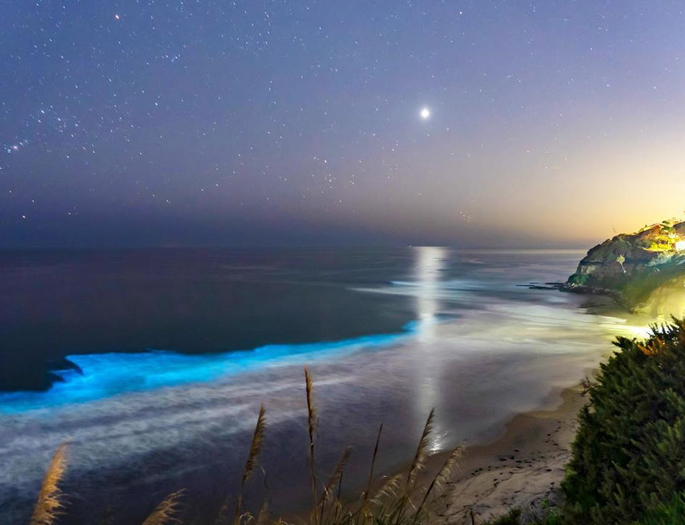San Diego Beach Bioluminescence
