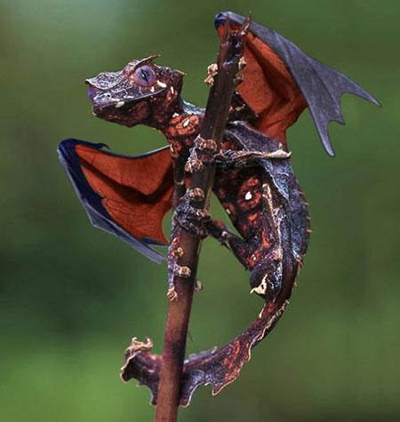 gaming gecko