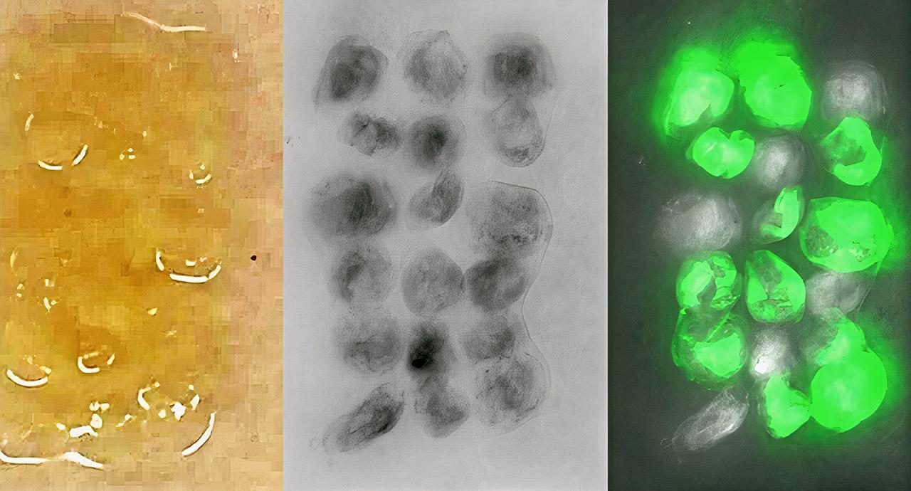 Scientist Living Materials 3D Building Blocks Genetic Engineering