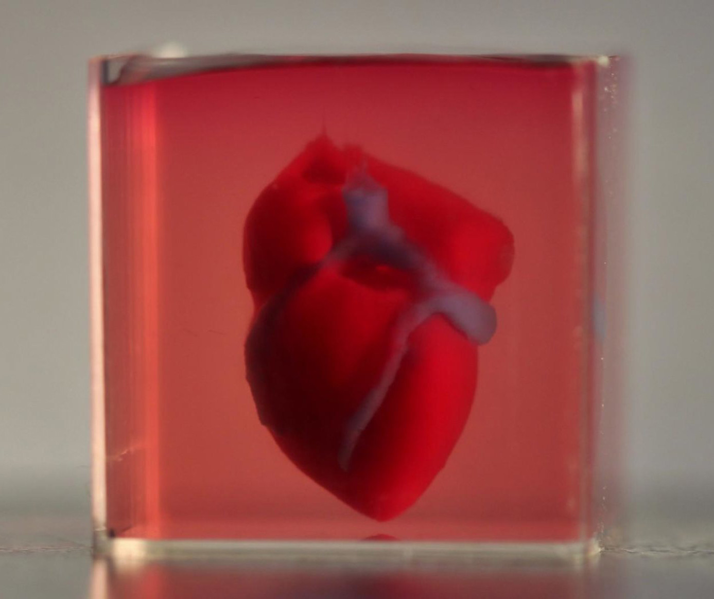 Scientist Print First 3D Heart