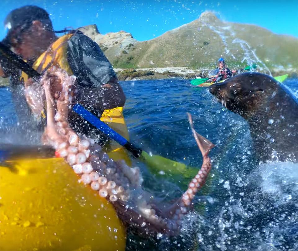 Seal Slaps Kayaker
