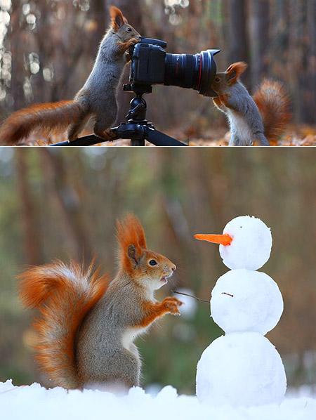 Secret Life Squirrels