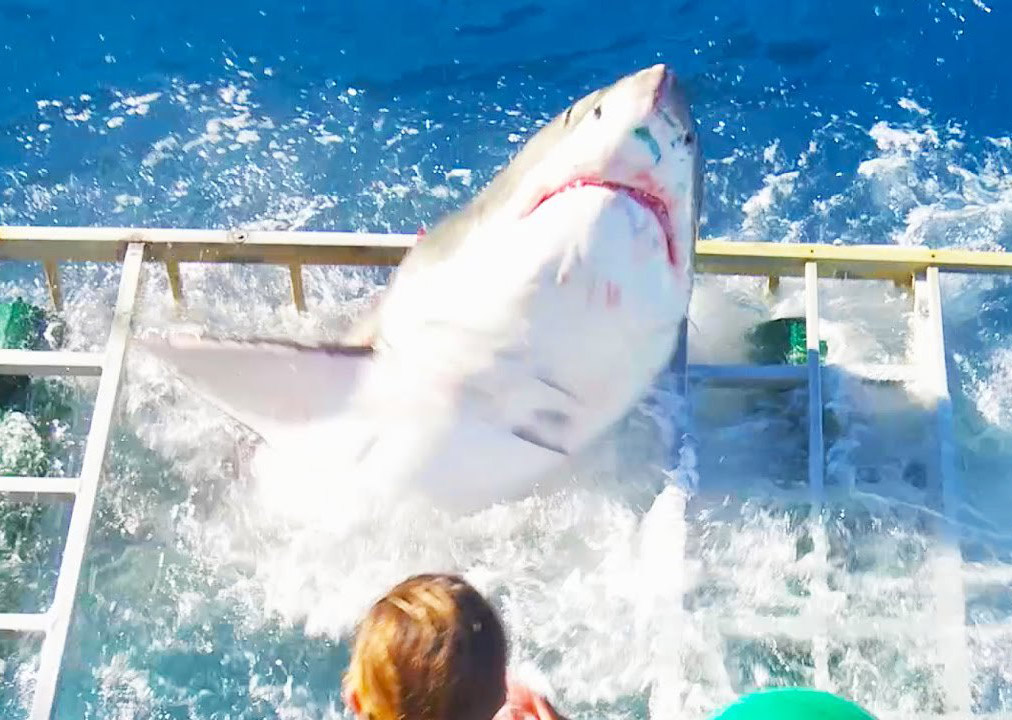 Shark Breaches Cage
