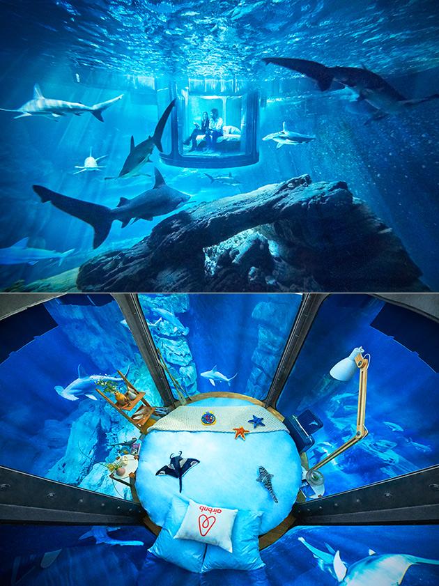 Shark Suite Air BNB