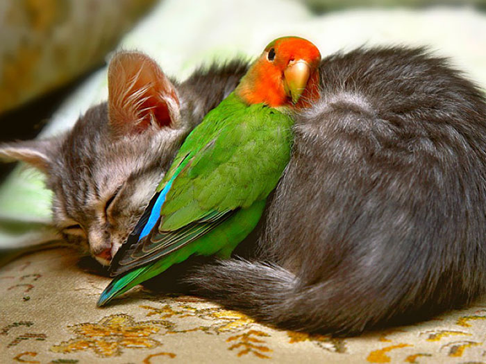 Sleeping Animal Friends