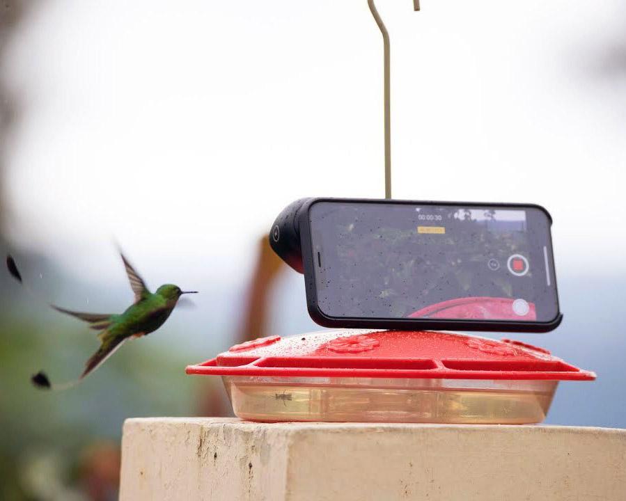 Slow Motion Hummingbird