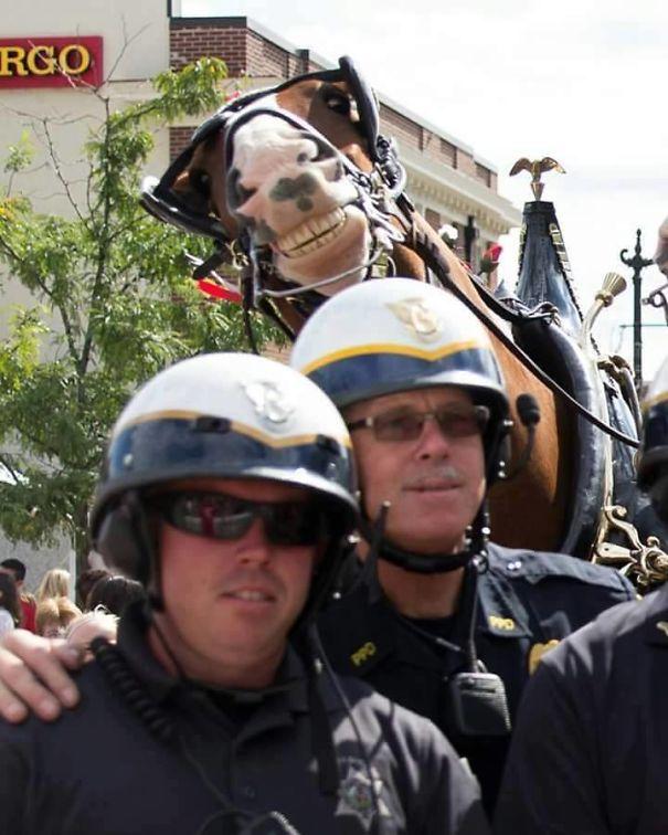 Smiling Horse Photobomb