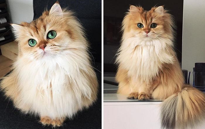 Smoothie Cat