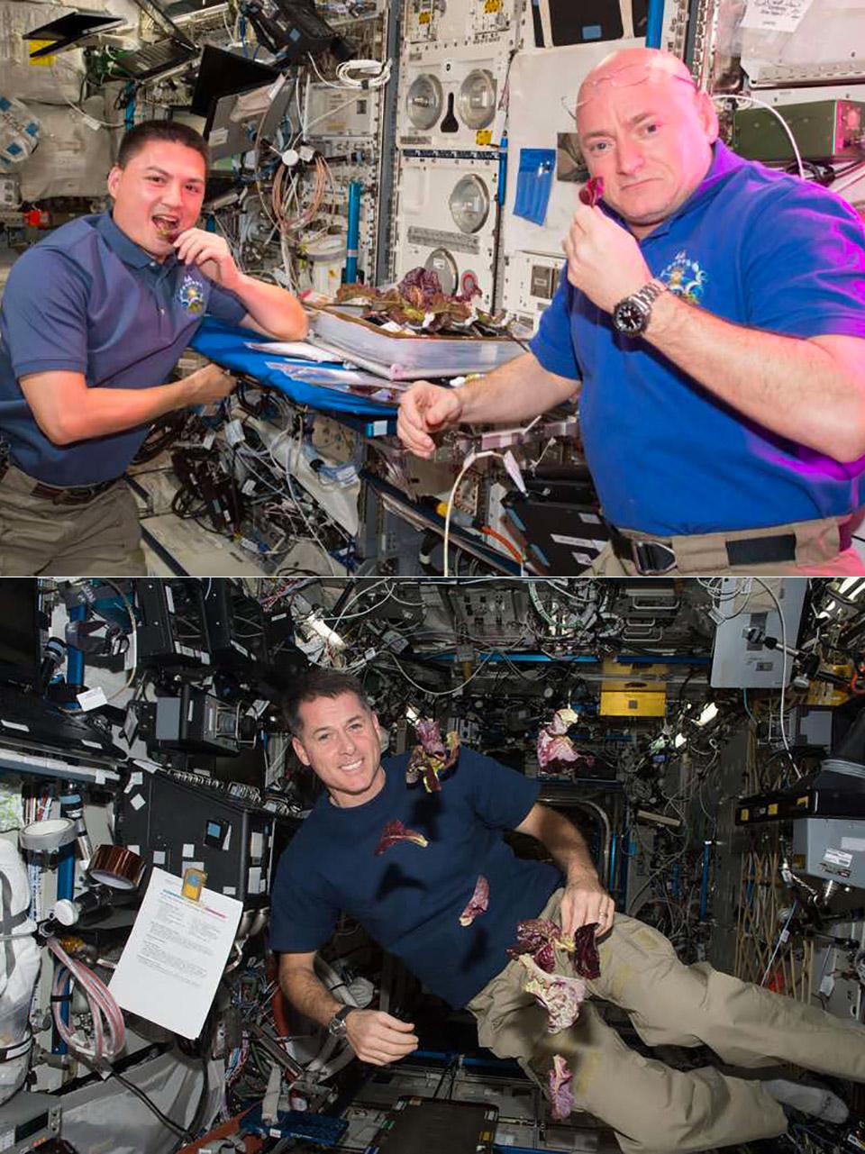 Space Station Lettuce