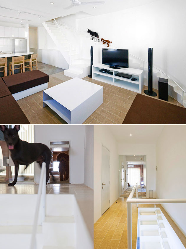 Special Staircase Dogs Home
