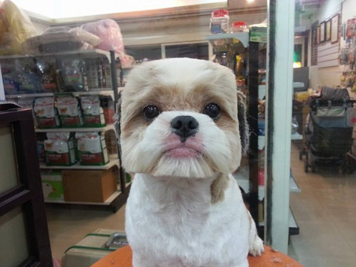 Square Haircut Dog