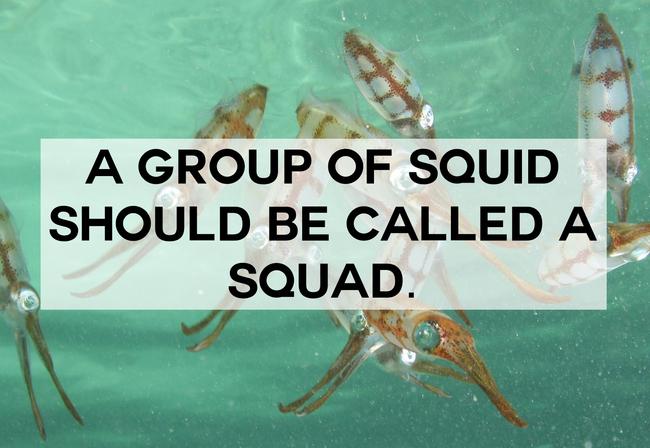 Squid Squad