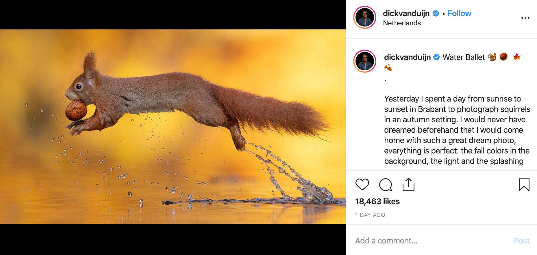 Squirrel Jumping Water with Nut