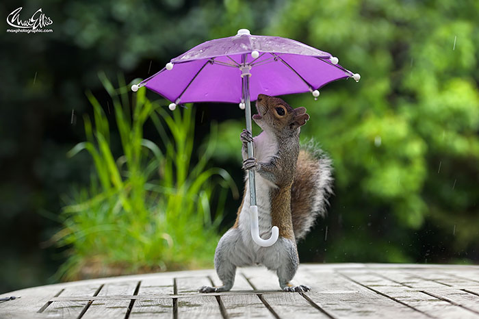 Squirrel Mini Umbrella