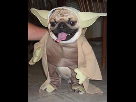 star_wars_costume_5.jpg