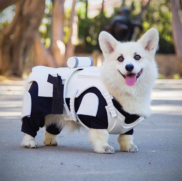Stormtrooper Corgi