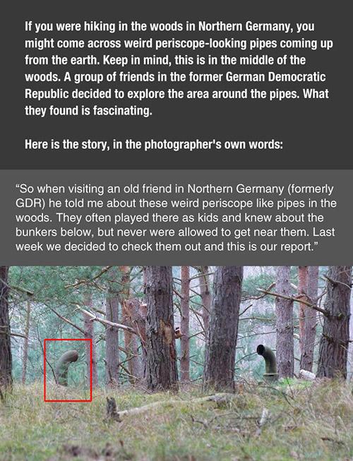 Strange Pipes Forest