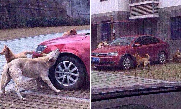 Stray Dog Revenge