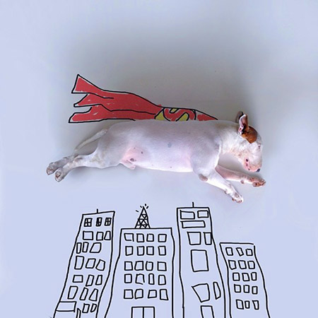 Bull Terrier Drawings