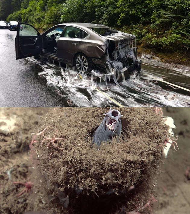 Slimed Tesla