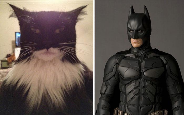 The Batman Cat